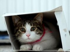 schrodingers cat
