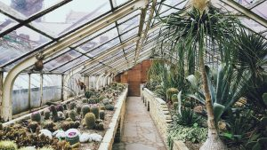greenhouse-