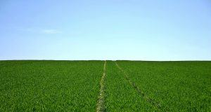 Technology | Alleviating Environmental Effects On The Food System