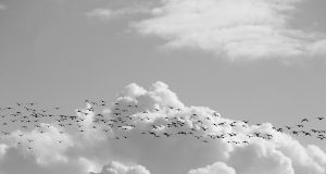 Top Tips for Preparing for Any Cloud Migration