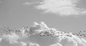 Is it time to consider migrating or replatforming your ecommerce site?